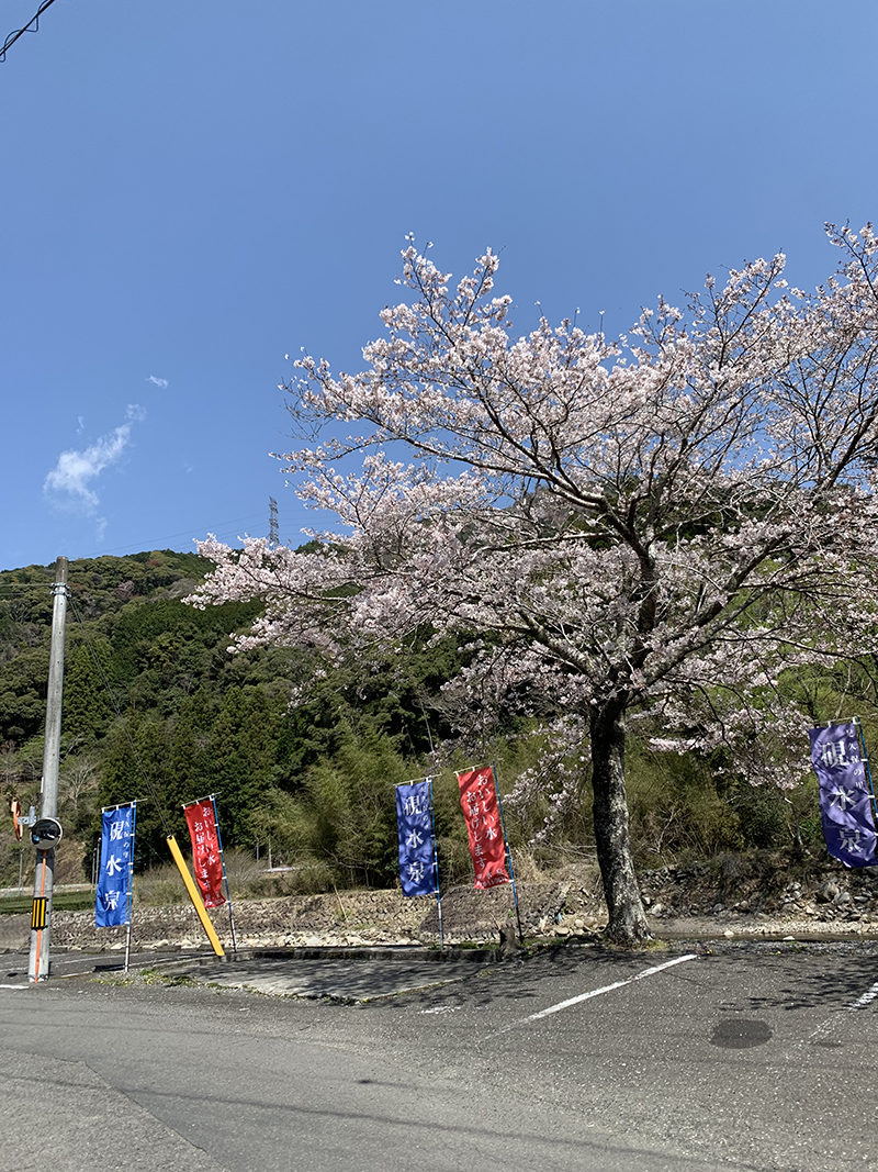硯水泉の桜 駐車場